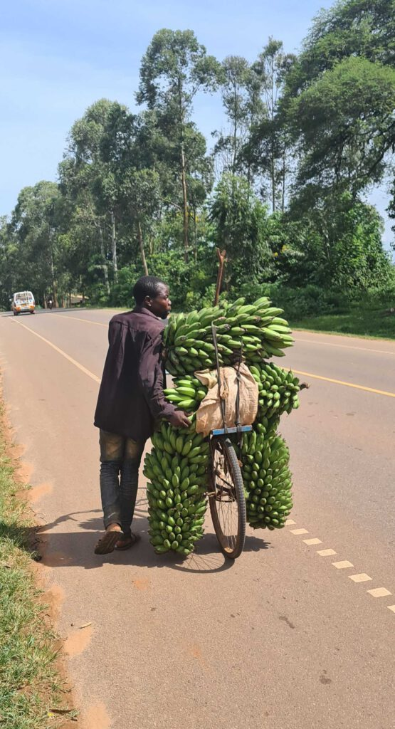 a man carries bananas on a bicycle